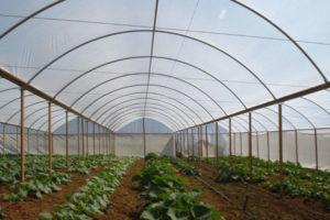 lona agrícola